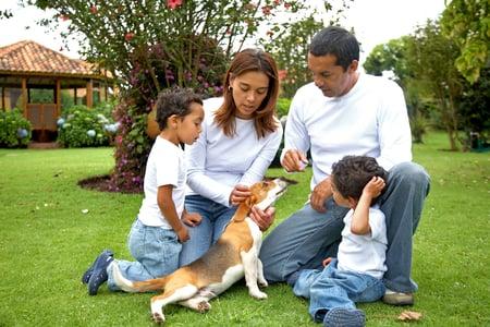 adoption support fund